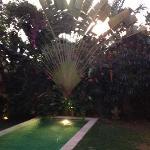 la piscine et son arbre du voyageur