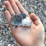 """""""shelly beach"""" @ Burleigh"""