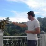 visite des singes lors du petit déjeuner ! Attention quand même ;-)