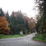 Vista da floresta da frente do hotel