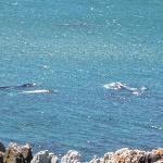 Wale direkt vor der Haustür !