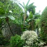 Jardín maravilloso