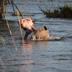Zambezi river boatride