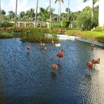 View of pond with flamingos & ducks, on the grounds