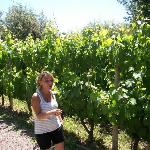 Wine tour - wonderful Malbec region