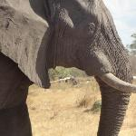 Close encounter of the elephant kind