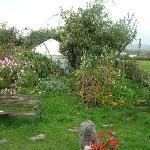Garden and Yurt