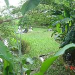 Martial arts lessons, near Buddah bungalow.
