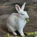 Rabbit having breakfast