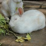 Rabbit taking rest