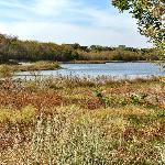 Oak Point and Bob Woodruff Parks