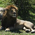 Photo de Porini Lion Camp