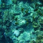 barriera corallina spiaggia