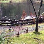 here duckie, duckie!