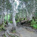 Trail on Mt Roberts