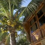 Coconuts outside my window