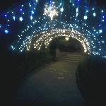 Arco de luces decorativo