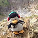 birdlife on top of mt mahawu manado