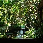 Fish pond viewed from lobby