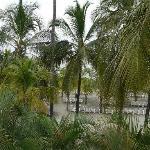 Blick durch die Palmen auf den hoteleigenen Strand