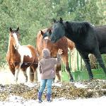 Playing with some of the horses