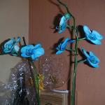 Een van de vele orchidee's die in de lobby staan