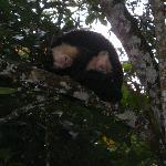 Capuchins at Alby Lodge