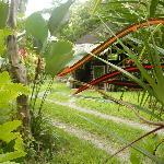 Brown vine snake