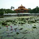 公園内の蓮池風景。