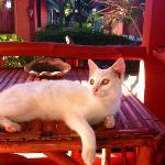 la cosa più bella il gattino
