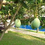 mango is everywhere