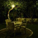 The garden at night
