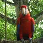 Macaw at the zoo
