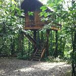 Our Tree House - One of the Six