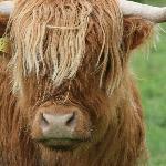 One of many farm animals