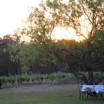 sunset at Botanica