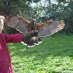 Thats me with Harris Hawk in 2007