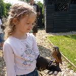 Youngest with a Kestrel