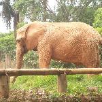 Sao Paulo Zoo
