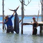 Daniel alias Hussein Bolt avec un marlin bleu