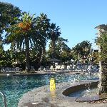Main pool and surrounding trees