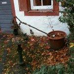 Bepflanzung im Innenhof