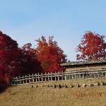 物見台と紅葉