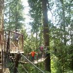 The Treetops Adventure