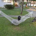 Hammock by the room