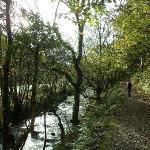 Winter's walk near Bristol