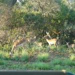 More buck