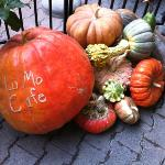 Harvest Time at La Mo's Cafe