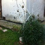 l'albero porta candele?