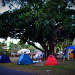 Our favourite campsite under a fig tree